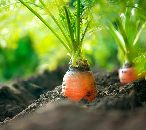 Dieta stricta cu morcovi cu care slabesti 6 kg in 3 saptamani